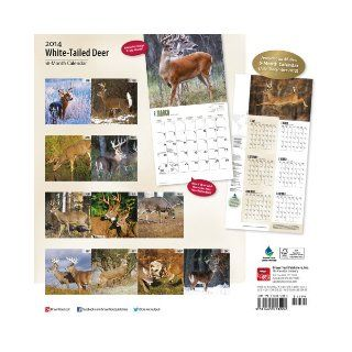 White Tailed Deer 2014 18 Month Calendar (Multilingual Edition) Browntrout Publishers 9781465013224 Books