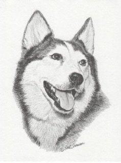 Siberian Husky Dog II Earl Sherwan Portrait Matted Art Card   5 in x 7 in Design   8 in x 10 in Matted  Prints
