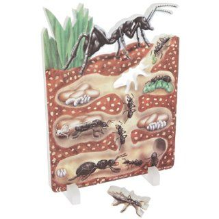 "Book Plus Ant Life Cycle Foam Model, 10"" x 14.5"" x 0.75"" Size: Industrial & Scientific"