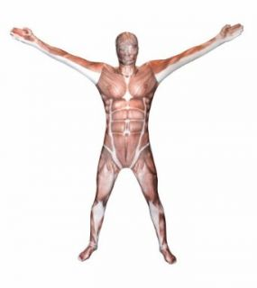 Morphsuits Premium Muscle  L, Skin Color / Red, Large: Clothing