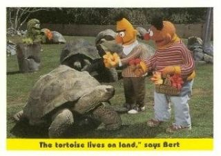 "The tortoise lives on land,"" says Bert trading card (Sesame Street) 1992 Idolmaker #91: Entertainment Collectibles"