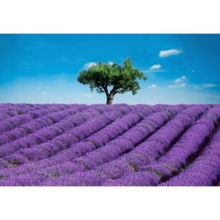 Ideal Decor 100 in. x 144 in. Provence Wall Mural DM144