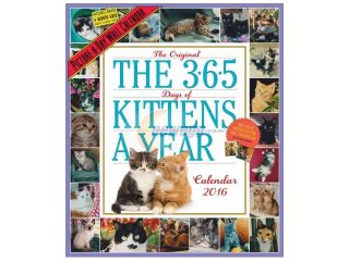 The 365 Days of Kittens a Year 2016 Calendar WAL