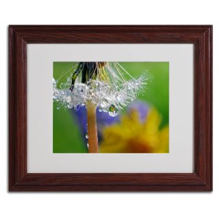 Trademark Fine Art Dandy Drops 2 by Steve Wall Framed Photographic