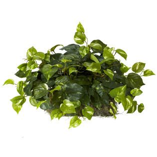 Pothos Ledge Plant (Set on Foam) Silk Plant   Home   Home Decor